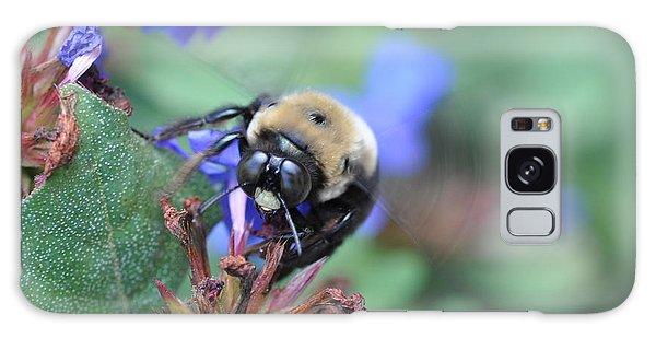 Bumblebee In Plumbago Larpentae Galaxy Case