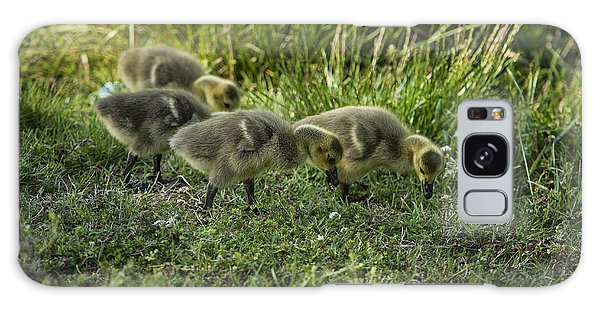 Gosling Galaxy Case - Canadian Goose Gosslings by John Greim