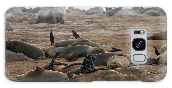 Cape Cross Seal Colony Galaxy Case