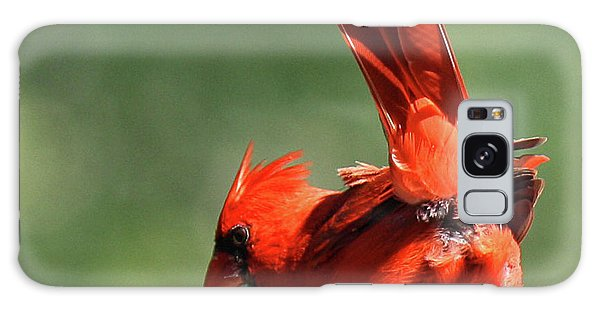 Cardinal-a Picture Is Worth A Thousand Words Galaxy Case