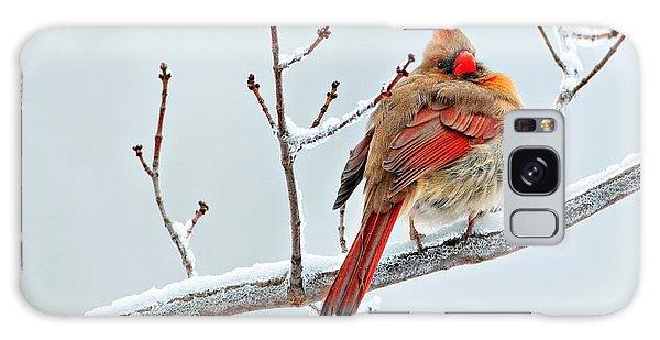 Cardinal I The Snow  Galaxy Case