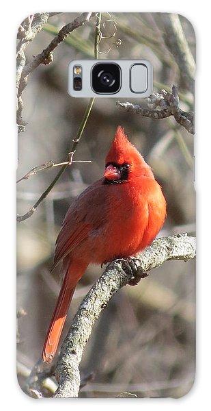 Cardinal Redbird Galaxy Case by Rebecca Overton