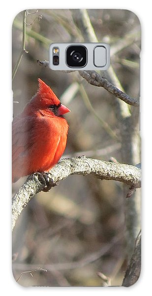 Cardinal Redbird Sunlit Galaxy Case by Rebecca Overton