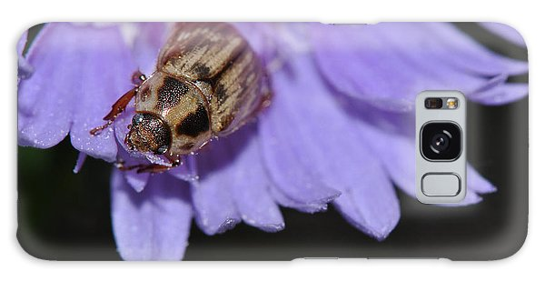 Carpet Beetle On Stokes Aster Galaxy Case