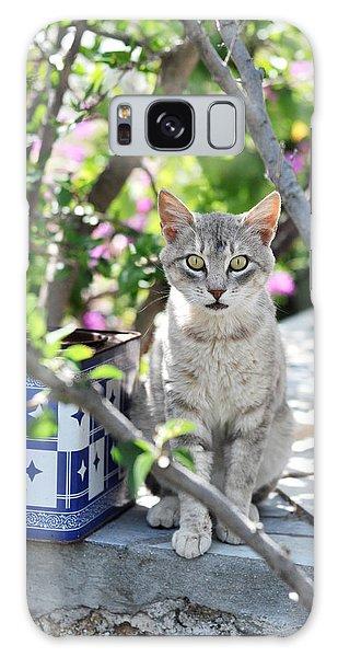 Cat Of Mykonos Galaxy Case
