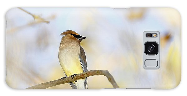 Cedar Waxwing On Yellow And Blue Galaxy Case