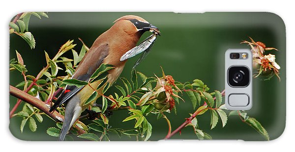 Cedar Waxwing With A Bug Galaxy Case