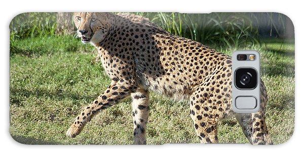 Cheetah Looking Galaxy Case