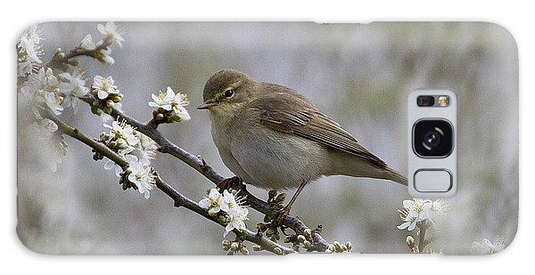 Chiff Chaff On Blackthorn Blossom Galaxy Case