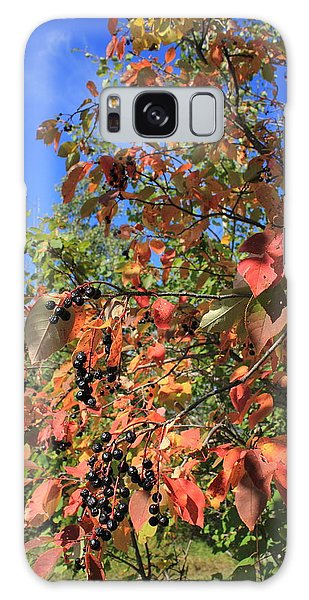 Chokecherry Tree Galaxy Case by Jim Sauchyn