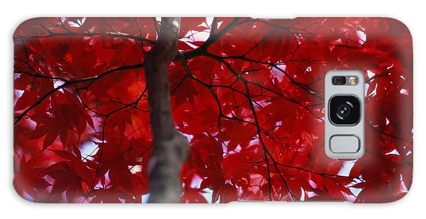 Brookside Gardens Galaxy Case - Close View Of Red Maple Leaves by Al Petteway