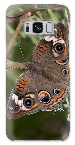 Common Buckeye Butterfly Din182 Galaxy Case