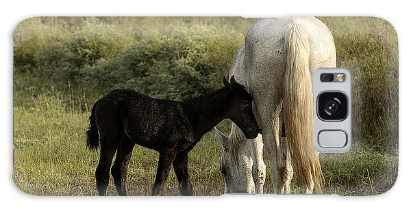 Cracker Foal And Mare Galaxy Case by Lynn Palmer