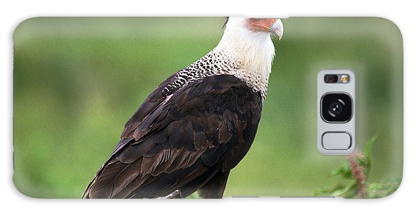 Crested Caracara Galaxy Case
