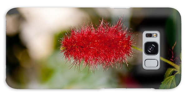 Crimson Bottle Brush Galaxy Case by Tikvah's Hope