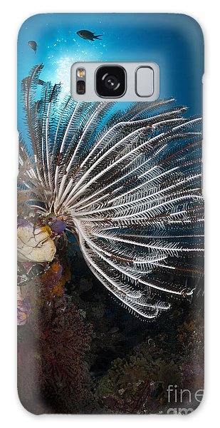Feather Stars Galaxy Case - Crinoid In Raja Ampat, Indonesia by Todd Winner
