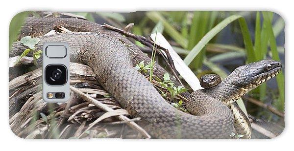 Cuddling Snakes Galaxy Case by Jeannette Hunt