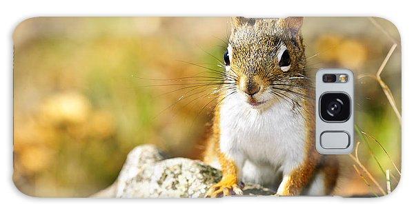 Cute Red Squirrel Closeup Galaxy Case by Elena Elisseeva
