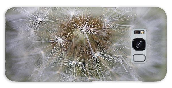 Dandelion Clock. Galaxy Case