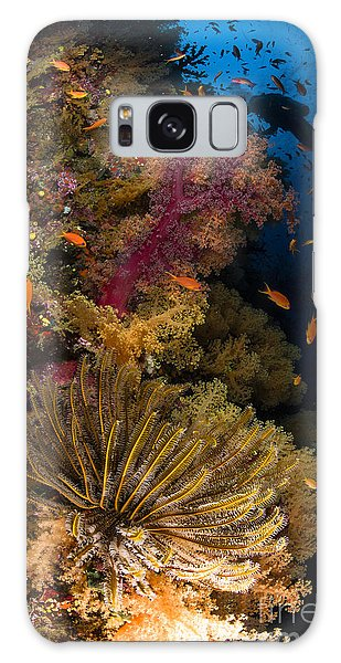 Feather Stars Galaxy Case - Diver Swims By Soft Corals And Crinoid by Todd Winner