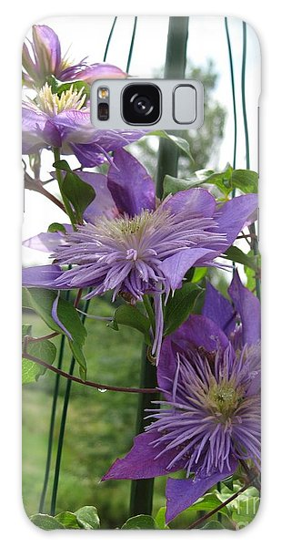 Double Clematis Named Crystal Fountain Galaxy Case by J McCombie