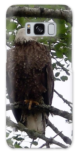 Eagle At Hog Bay Maine Galaxy Case