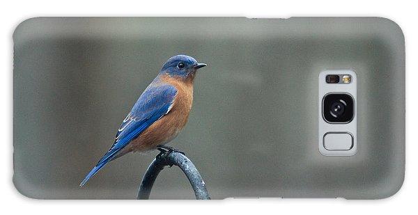 Crossville Galaxy S8 Case - Eastern Bluebird On Perch 3 by Douglas Barnett