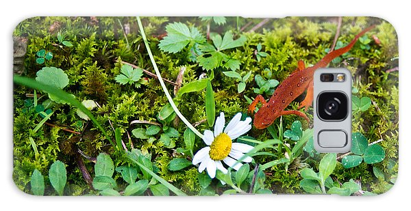 Newts Galaxy S8 Case - Eastern Newt Juvenile 5 by Douglas Barnett