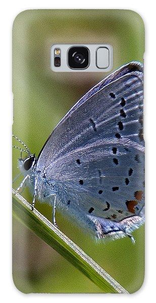 Eastern Tailed-blue Butterfly Din045 Galaxy Case by Gerry Gantt
