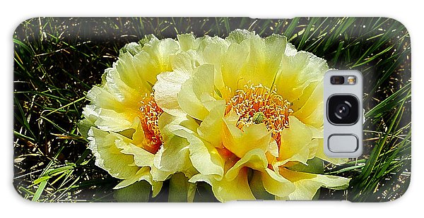 Plains Prickly Pear Cactus Galaxy Case by Blair Wainman