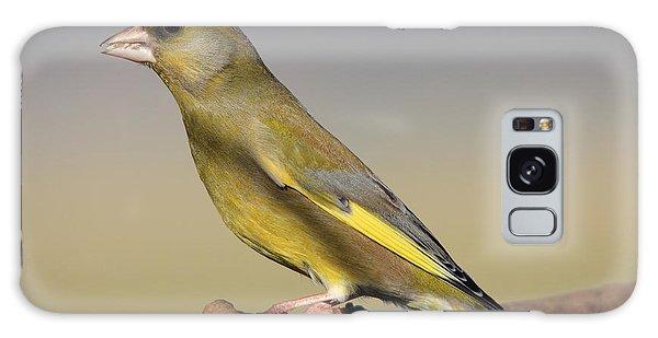 European Greenfinch Galaxy Case
