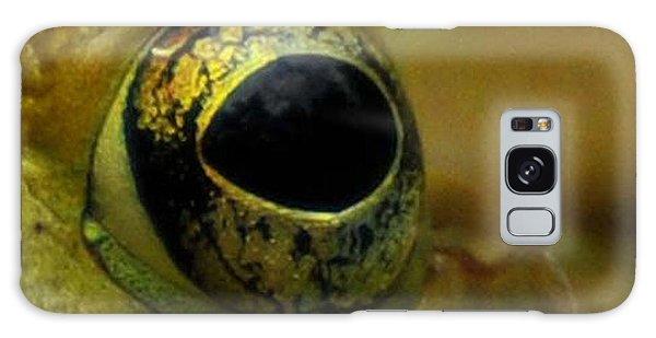 Newts Galaxy S8 Case - Eye Of Frog by Paul Ward