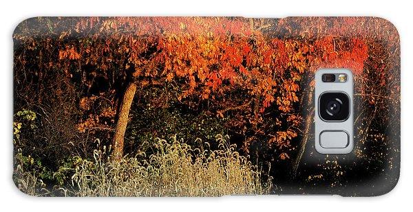 Fall Colors 2 Galaxy Case by Vilas Malankar