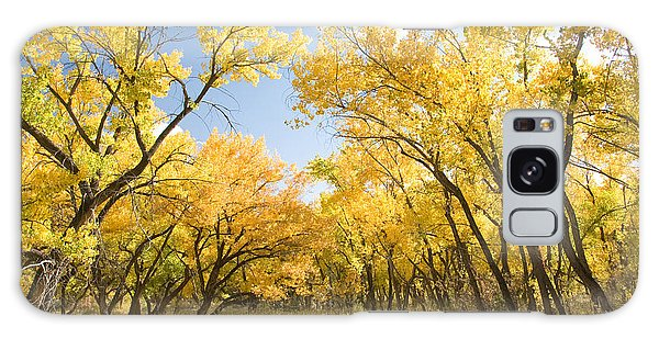 Fall Leaves In New Mexico Galaxy Case by Shane Kelly