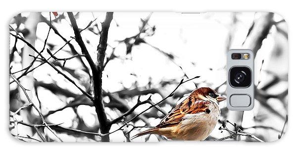 Fall Sparrow Galaxy Case