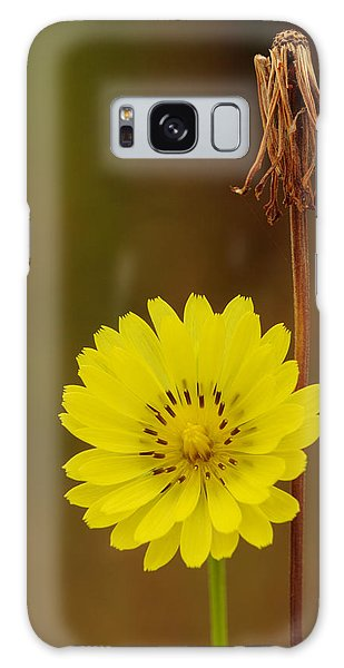 False Dandelion Flower With Wilted Fruit Galaxy Case by Daniel Reed