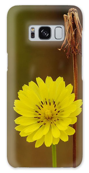 False Dandelion Flower With Wilted Fruit Galaxy Case