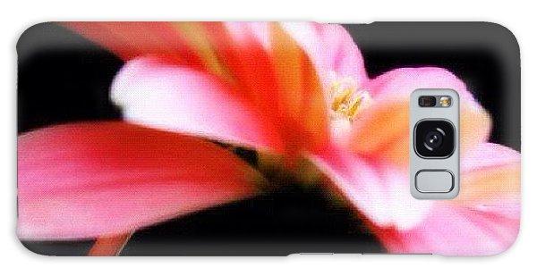 Edit Galaxy Case - #flower #flowers #daisy #pretty #beauty by Jamiee Spenncer