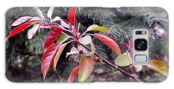 Flowering Tree 3 Galaxy Case by Gerald Strine