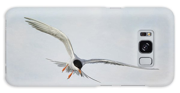 Forster's Tern Upon Cirrus Skies Galaxy Case