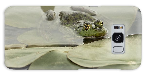 Frog On Lily Pads  Galaxy Case