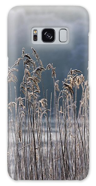 Frozen Reeds At The Shore Of A Lake Galaxy Case