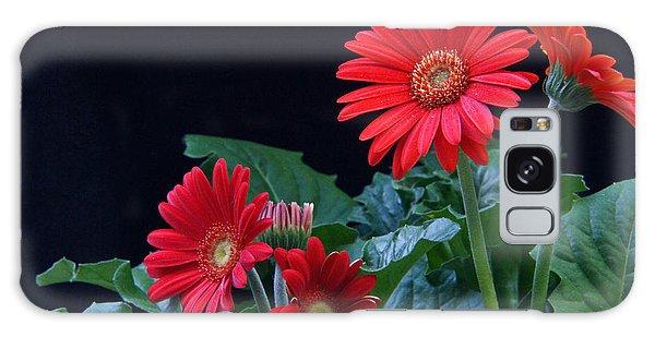 Crossville Galaxy S8 Case - Gerbera Daisy 7 by Douglas Barnett