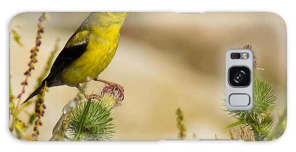 Goldfinch On Lookout Galaxy Case