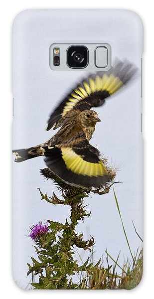 Goldfinch On Thistle Galaxy Case