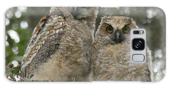 Great Horned Owl Babies Galaxy Case by Myrna Bradshaw