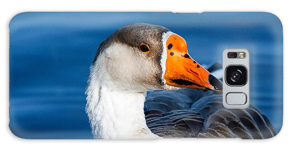 Greater White Frontal-goose Striking A Pose Galaxy Case