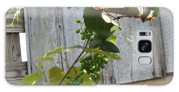 Green Grapes On Rusted Arbor Galaxy Case