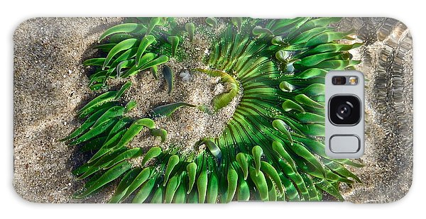 Green Sea Anemone Galaxy Case