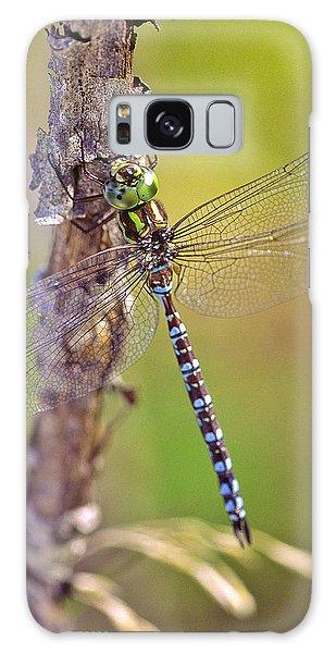 Green-striped Darner Dragonfly Galaxy Case